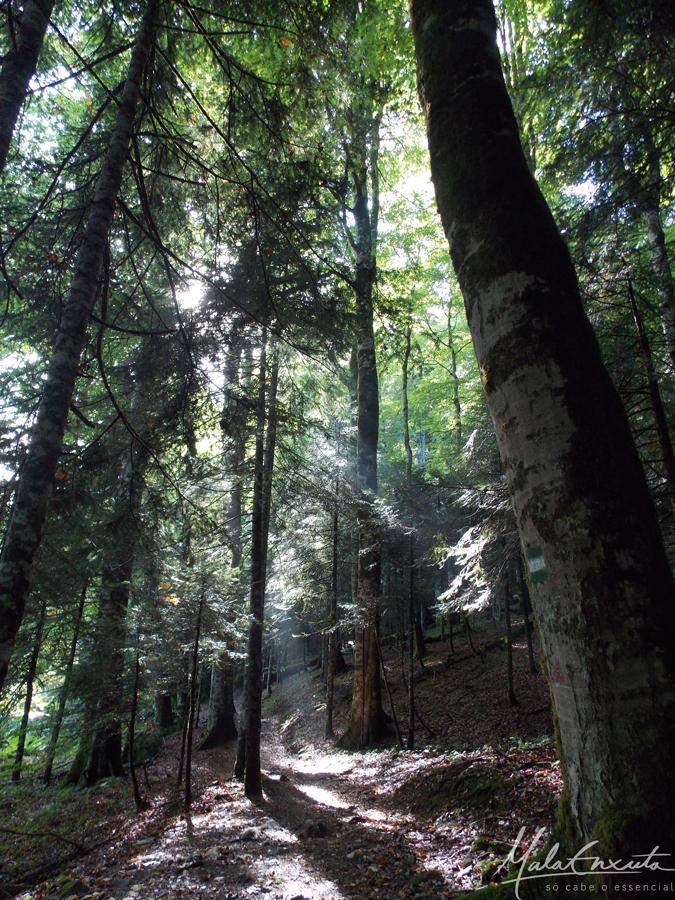 Floresta-do-Biogradaska-Park