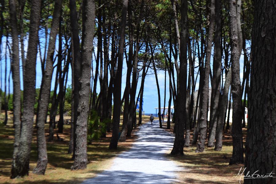 Ilha Gorriti, Punta Del Este, Uruguai