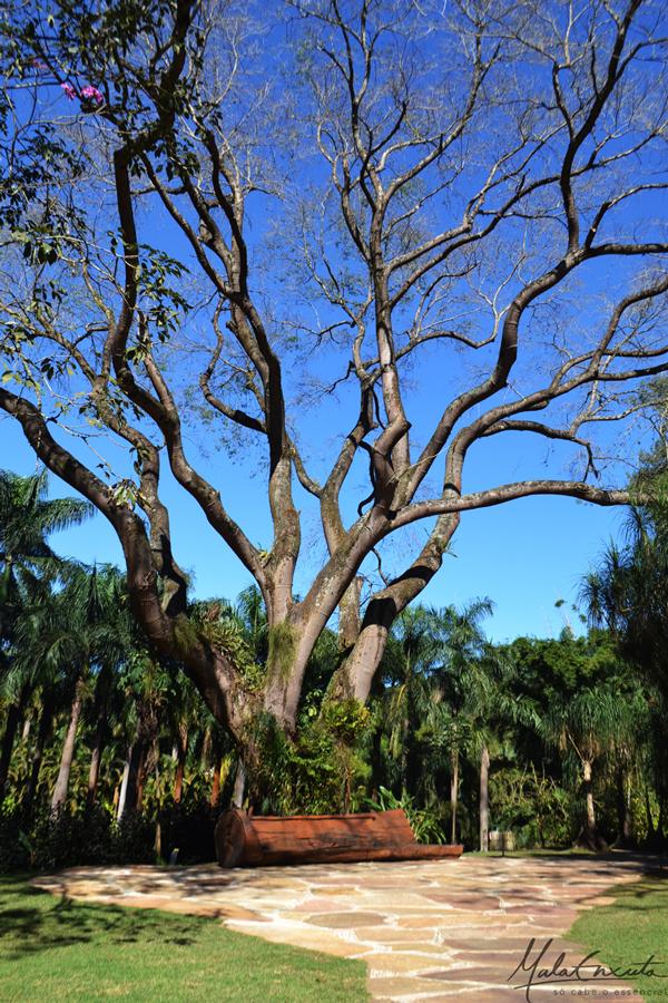 Árvore-tamboril