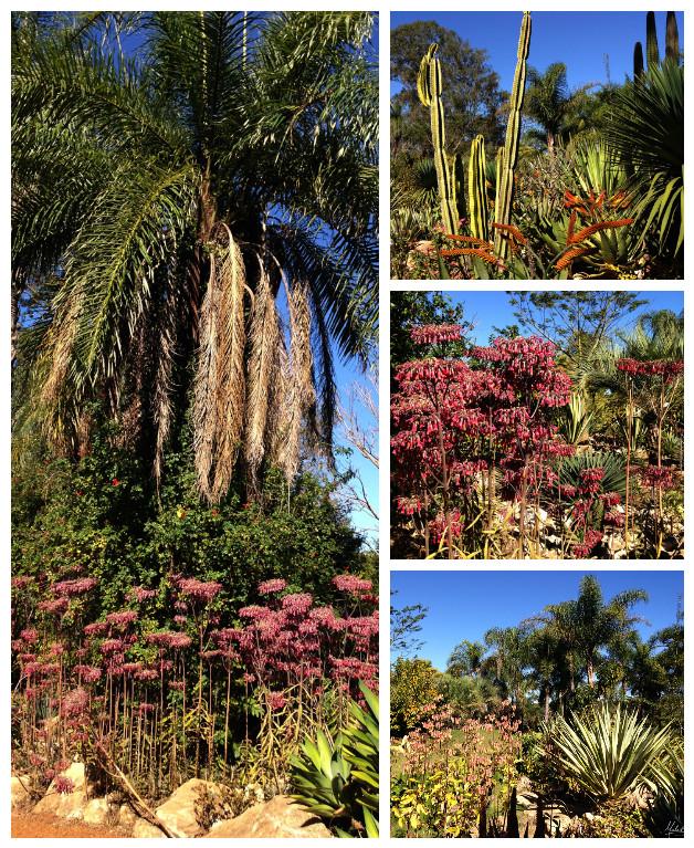 jardim-desertico-inhotim-viagem