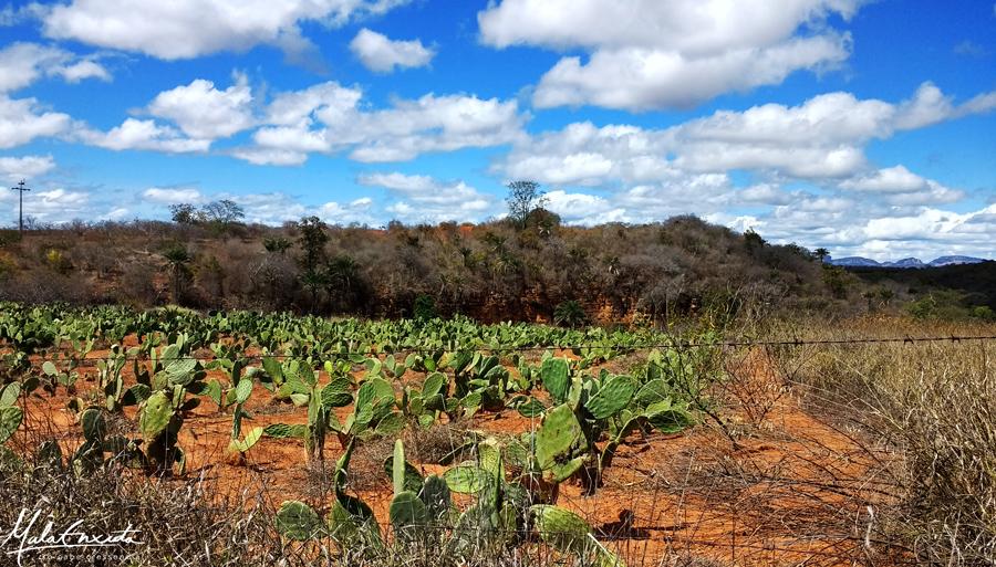 Plantação de Palmas